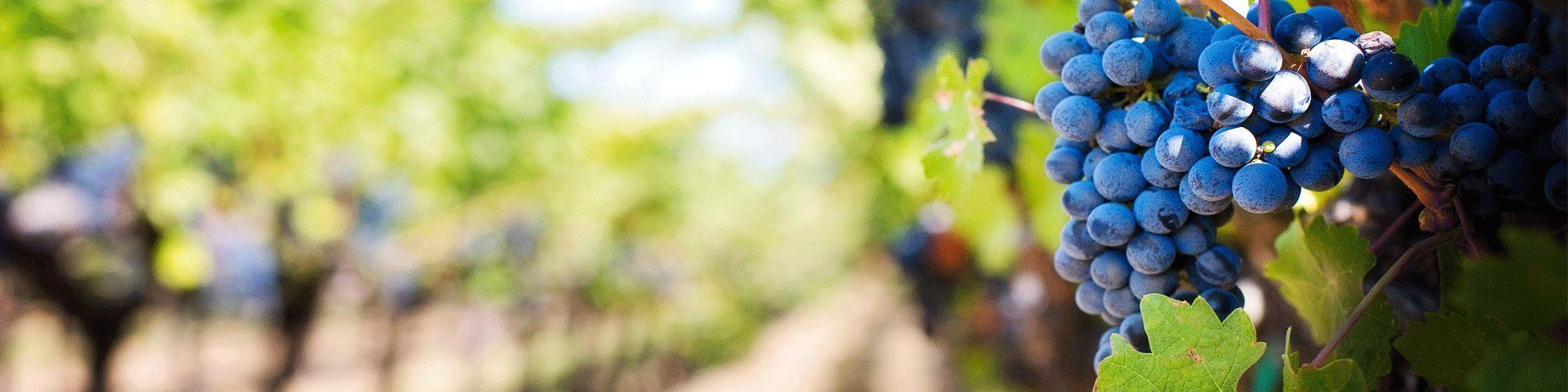 Vino degust